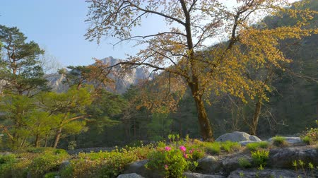 sokcho : Springtime in Seoraksan National Park, South Korea. Sliding shot