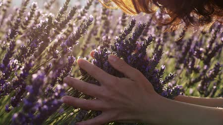 Young woman gently holding lavender flowers in her hands and smelling the purple flowers during a bright sunny day. Slow motion shot Stock mozgókép