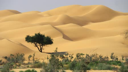 Oman, Arabian Peninsula. Sand dunes captured in the spot where the desert begins. Panning shot, UHD
