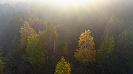 Flying over autumn misty woods during sunrise. Aerial shot, 4K Стоковые видеозаписи
