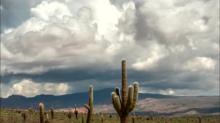 andy : los Cardones national park, Salta, Argentina. Time lapse with big cactus, mountains and clouds. UHD, 4K