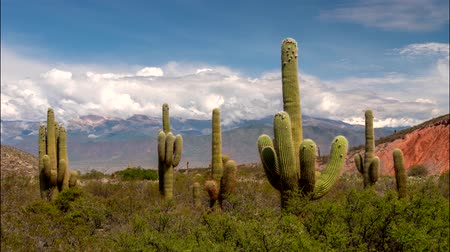 Анды : Time lapse of big green cacti with mountains and clouds on background. Los Cardones national park, Salta, Argentina. UHD 4K