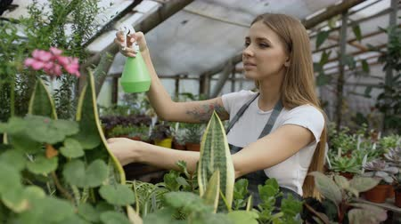 florista : Attractive woman gardener in apron watering plants and flowers with garden sprayer in greenhouse