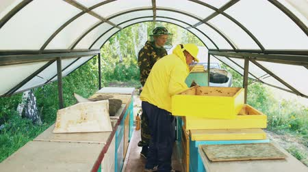 apiary : Two beekeepers checking frames and harvesting honey while working in apiary on summer day Stock Footage