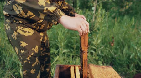 apiary : Young beekeeper man holding wooden frame with bees for checking while working in apiary Stock Footage