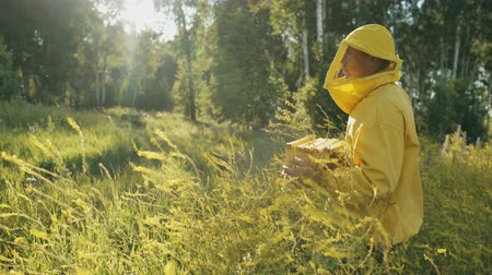 apiary : Pan shot of beekeeper man with wooden frame walking in blossom field while working in apiary Stock Footage