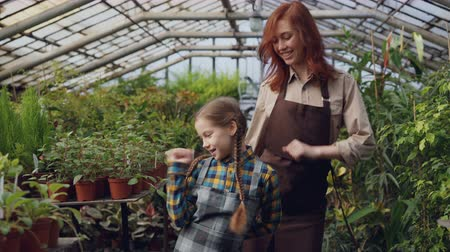 bahçıvan : Young female gardener in apron and her cute daughter are dancing in greenhouse having fun. Happy family, gardening, parents and children concept. Stok Video