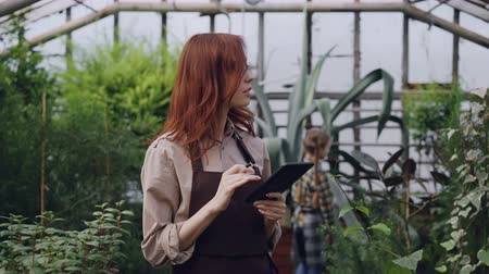 inventario : Owner of spacious greenhouse is doing inventory checking and counting plants and using tablet while her curious child is playing with large flower in background.