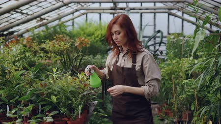 frasco pequeno : Hothouse worker wearing apron is watering plants and checking leaves while working inside greenhouse. Profession, growing flowers, workplace and people concept.