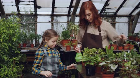 püskürtücü : Young woman is washing plant leaves in orchard while her curious daughter is touching flowers. Child is interested in her mothers work, they are talking and smiling. Stok Video