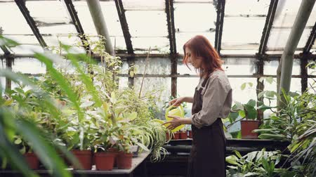 watering can : Cheerful female worker in uniform is watering green plants in orchard with watering-pot. Pretty young woman is concentrated on her work in greenhouse. Stock Footage
