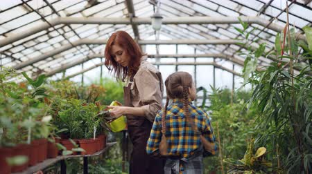 konewka : Cheerful greenhouse worker is watering plants in workplace with her helpful daughter and talking to child while little girl is sprinkling greenery and laughing.