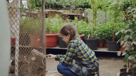 hare : Happy little girl is watching caged rabbits in greenhouse, touching them and talking to funny animals. Green plants and hothouse interior in background.