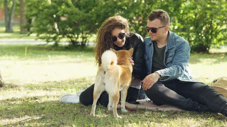 芝 : Cute couple man and woman are patting beautiful dog and talking sitting on lawn in the park. Modern lifestyle, domestic animals and summertime concept.