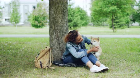 cuidadoso : Kind African-American girl caressing beautiful shiba inu dog sitting in the park on grass under the tree with city landscape visible in background.