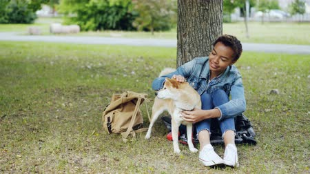 patting : Young African American woman is caressing adorable puppy resting in the park on green lawn and talking to pet with kindness and adoration. People and animals concept.