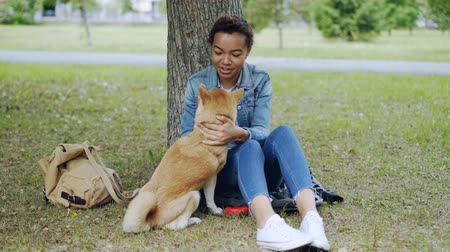 patting : Dog owner African American girl is feeding shiba inu puppy then petting it relaxing in the park in summer. Loving animals, taking care of pets and outdoor rest concept.