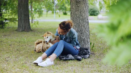 patting : Cheerful mixed race girl is cuddling with beautiful shiba inu dog and caressing the animal resting in park under tree while pet is enjoying love and care. Stock Footage