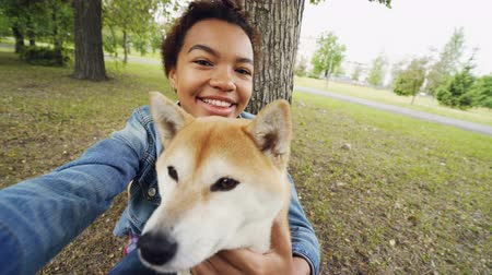 芝 : Point of view shot of cheerful African American teenage girl taking selfie with adorable shiba inu dog holding camera, posing and looking at camera. People and animals concept. 動画素材