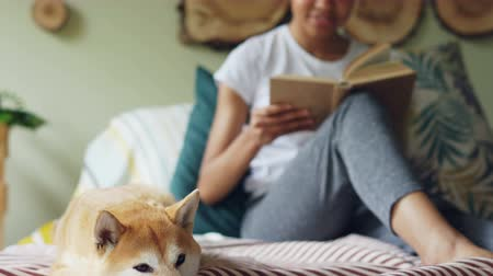 obediente : Tilt-up shot of cheerful student caressing her dog then reading book sitting on bed at home. Beautiful modern interior, linen and pillows, green plants are visible. Stock Footage