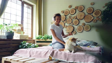 patting : Cute mixed race woman is listening to music with headphones, dancing sitting on bed and stroking her adorable shiba inu dog with love and care. People, technology and animals concept. Stock Footage