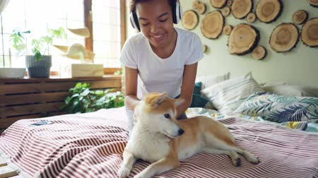 okşayarak : Joyful African American teenage girl is listening to music with headphones and fussing her calm shiba inu dog lying on bed and enjoying its owners love. Fun and animals concept. Stok Video