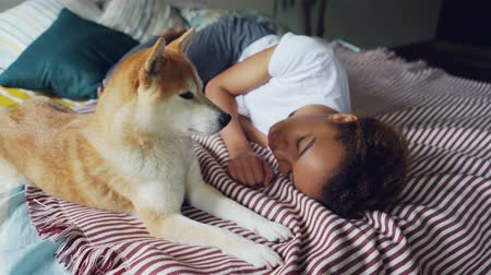 loajální : Charming African American lady is sleeping on wooden bed with modern linen while her cute loyal dog is lying beside her and licking its muzzle.
