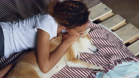 patting : Laughing African American girl is waking up her sleeping shiba inu dog fussing animal and talking to it while doggy is lying and enjoying rest and love.