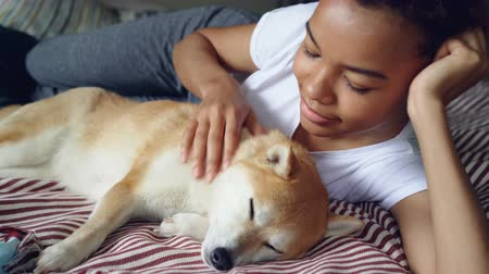 patting : Beautiful shibe inu puppy enjoying love and care while its tender owner attractive African American girl is stroking it looking with tenderness at her adorable pet.