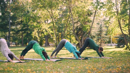 életerő : Beautiful girls are doing yoga exercises in park practising sequence of asanas upward and downward facing dog then warrior pose and plank position. Wellness and nature concept. Stock mozgókép