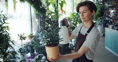 püskürtücü : Beautiful young lady florist is sprinkling green potted plant in flower shop holding modern sprinkler busy with work. People, business and work concept. Stok Video