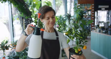 spraying : Pretty young lady florist in apron is watering exotic plant in pot holding sprinkler smiling at work doing casual routine job. People and profession concept.