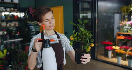 floriculture : Cheerful young florist is watering cirtus plant in flower store using sprayer bottle enjoying job working with greenery. People and small business concept. Stock Footage