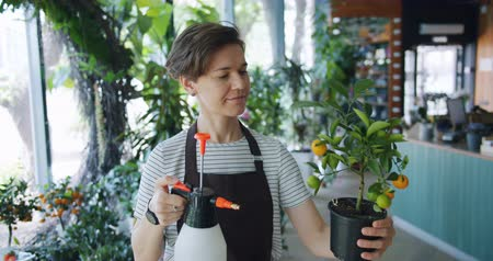 floriculture : Slow motion of female florist cute young lady spraying exotic potted plant with water in flower shop caring for greenery. People and small business concept.
