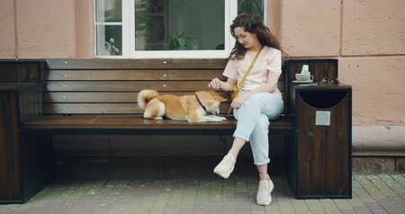 shiba inu : Female dog owner loving woman is caressing shiba inu puppy sitting on bench in street cafe while cute animal licking girls hands. Happiness and love concept. Stock Footage