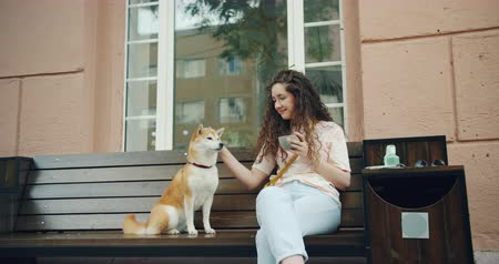 shiba inu : Cheerful young lady is stroking adorable shiba inu dog sitting on bench outside in cafe holding cup of coffee enjoying simmer day outdoors. People and happiness concept.