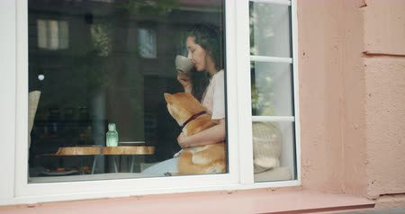 kafeterya : Beautiful young woman is drinking tea in cafe and hugging cute shiba inu dog sitting on window sill smiling. Lifestyle, happiness and joyful people concept. Stok Video