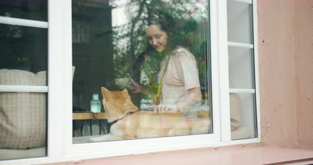 shiba inu : Caring young lady is caressing cute small dog sitting at home on window sill smiling holding cup of tea. Modern lifestyle, people and happiness concept. Stock Footage