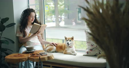 芝 : Good-looking girl student is stroking shiba inu dog and reading book in cafe on window sill enjoying modern literature. Youth culture and domestic animals concept.