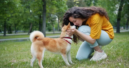 shiba inu : Young woman loving owner is talking to pet dog shiba inu breed then touching noses smiling in green park expressing love and tenderness. People and animals concept.