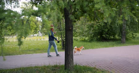 shiba inu : Woman student is walking beautiful shiba inu dog in green park and using smartphone outdoors touching screen then looking around. Gadgets and pets concept. Stock Footage