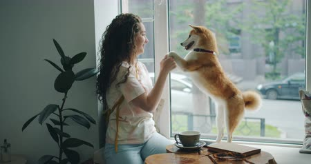 shiba inu : Happy young woman is dancing with pet dog sitting on window sill in cafe having fun enjoying music and animal. Modern lifestyle, people and youth concept. Stock Footage
