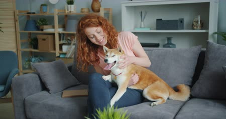 shiba inu : Cheerful young lady happy dog owner is stroking beautiful shiba inu puppy on couch in flat sitting together smiling. Lifestyle, love and friendship concept.