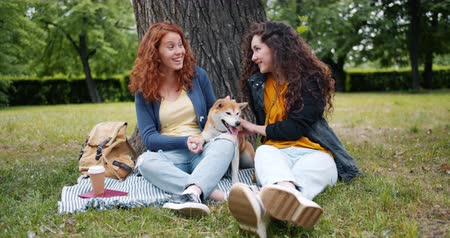 shiba inu : Slow motion of girls friends sitting on lawn in park with cute dog talking and having fun on beautiful summer day. People, conversation and animals concept.