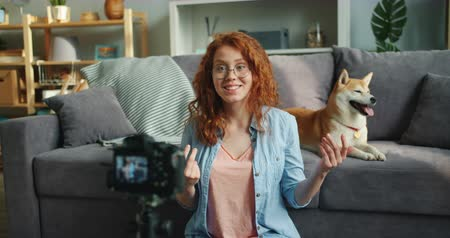 shiba inu : Happy young woman is recording video about pedigree shiba inu dogs at home using professional camera talking smiling and gesturing. Social media and animals concept. Stock Footage