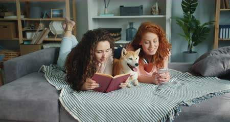 shiba inu : Girls friends are reading book and using smartphone lying on bed with cute shiba inu dog in cozy apartment. Modern lifestyle, friendship and animals concept. Stock Footage