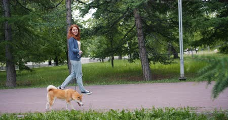 芝 : Slow motion of pretty woman walking shiba inu dog in park on summer day smiling enjoying summertime and relaxing walk. Youth and leisure time concept.
