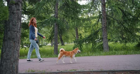 shiba inu : Side view of attractive young lady walking in green park with adorable shiba inu dog going along road around trees. People, animals and lifestyle concept.