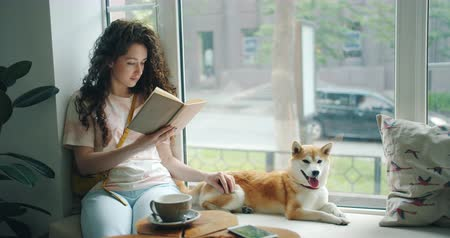 芝 : Female student is reading book and stroking pet dog sitting on window sill in cafe enjoying hobby and leisure time. Literature, animals and youth lifestyle concept. 動画素材