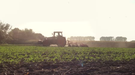 traktor : tractor reaping in 1080p. agriculture scene with back light
